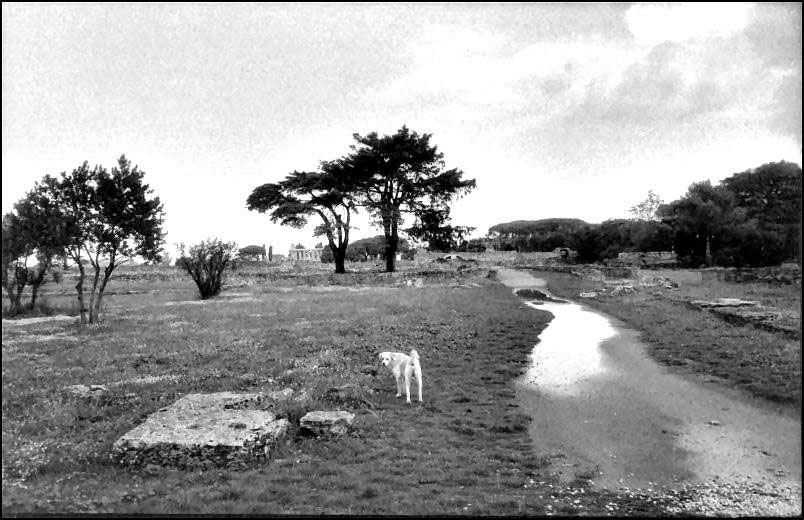 Paestum dopo il temporale  II