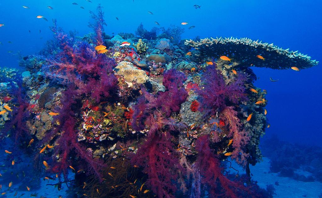 Painted reef