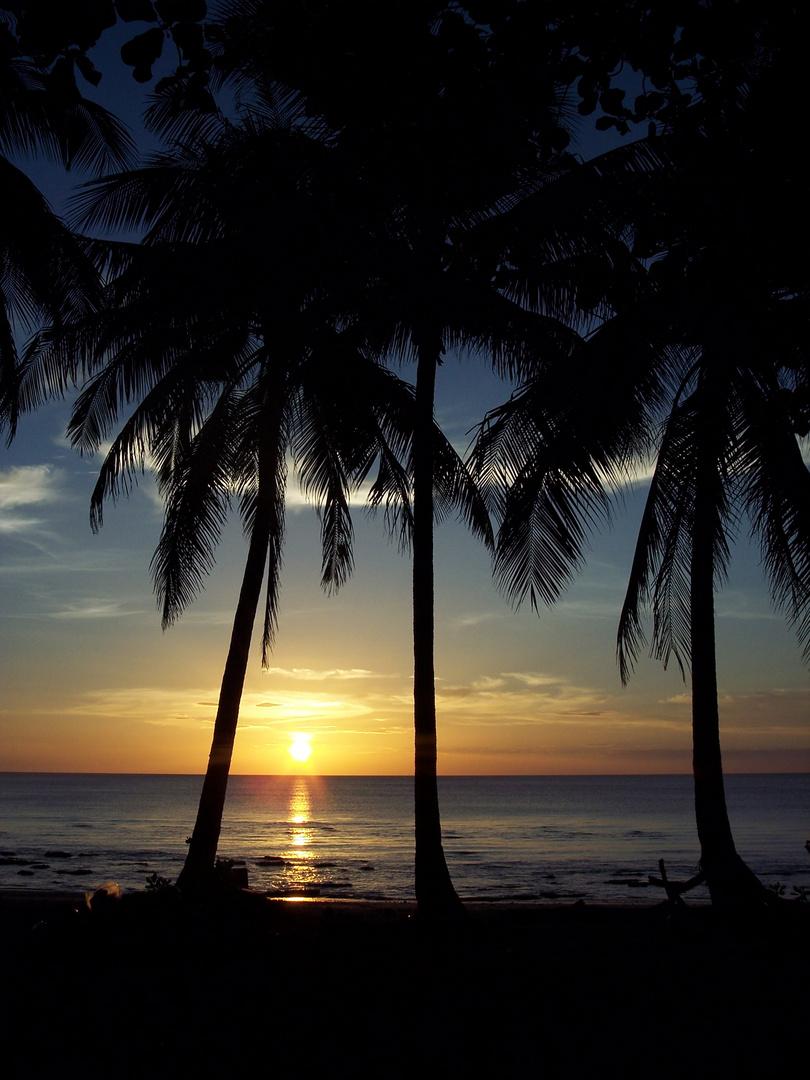 paisaje de palmeras