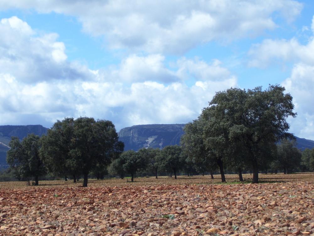 Paisaje en Los Montes de Toledo...FERNANDO LÓPEZ   fOTOGRAFÍAS...