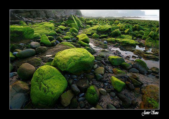 Paisaje en verde y bruma.
