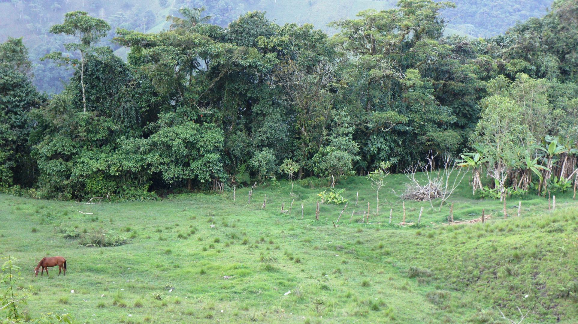 Paisaje via el Manzano