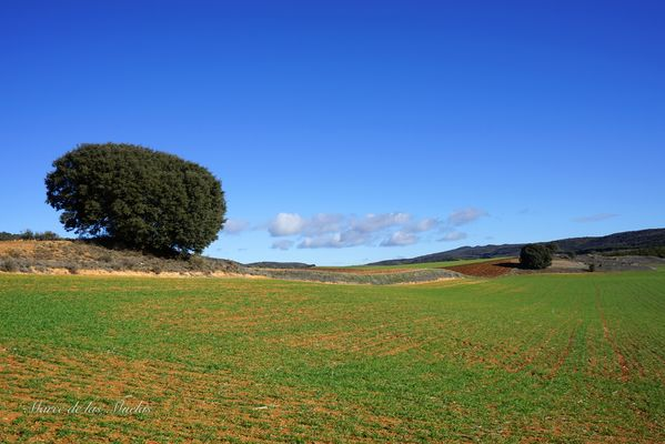 ...paisajes de Castilla la Mancha...
