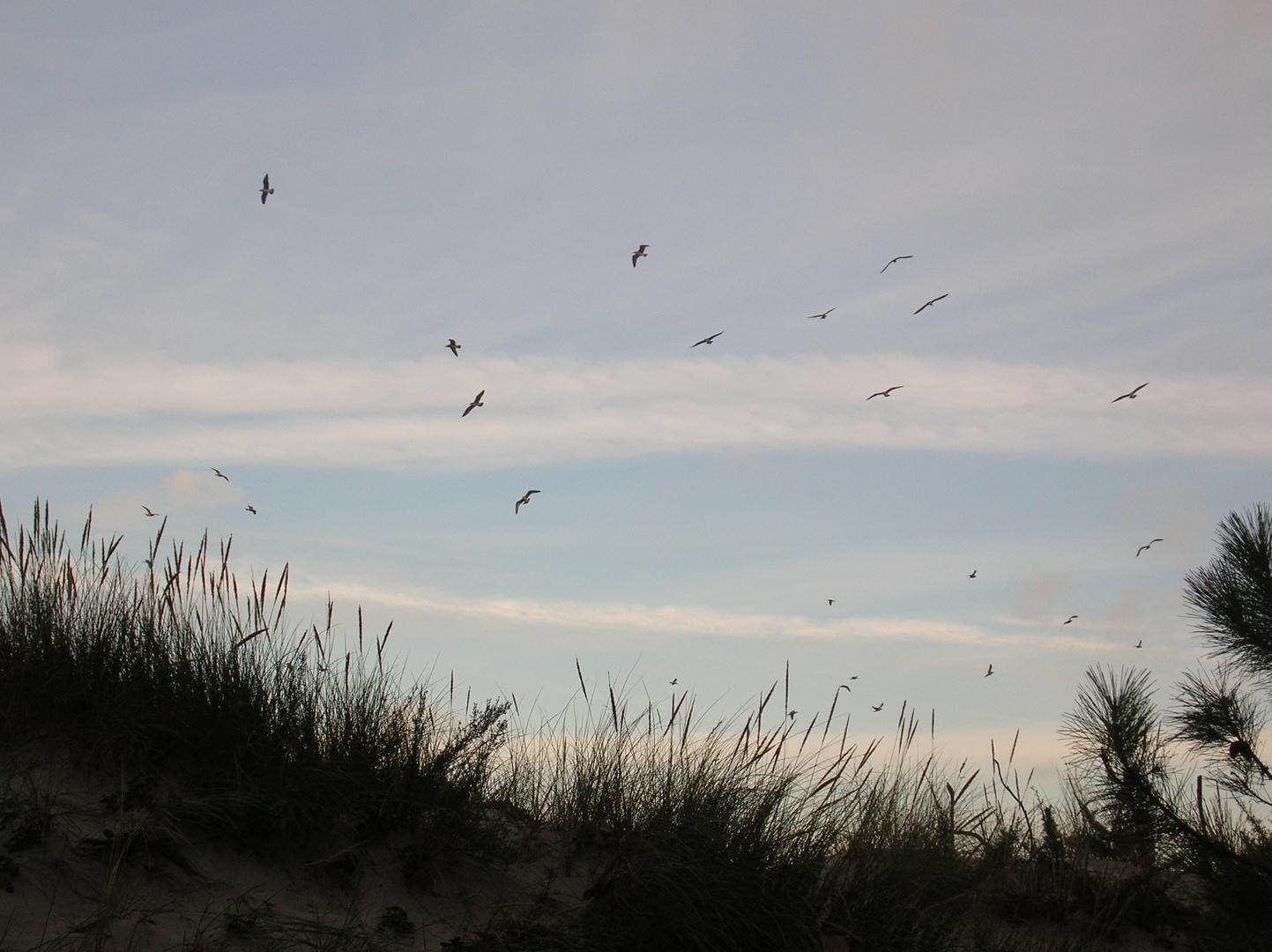 pájaros a contraluz