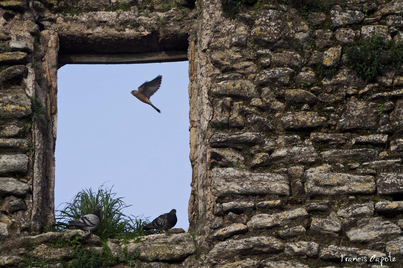Pájaros en Aguilar de la frontera
