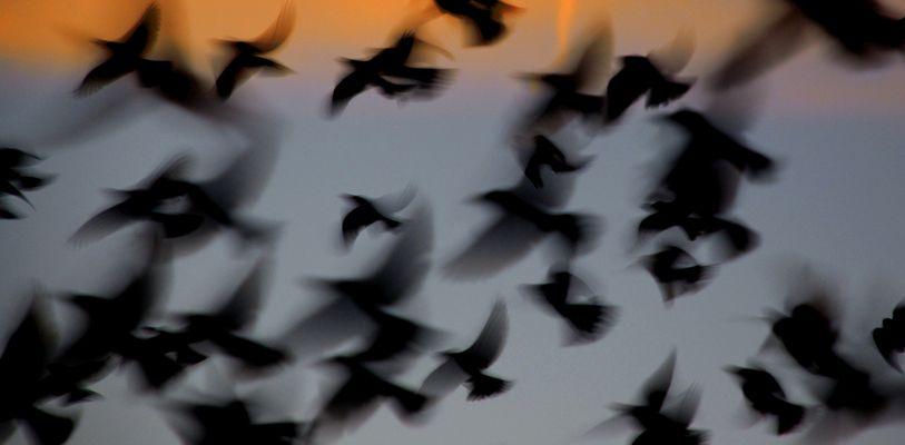 Pájaros en la azotea