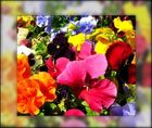 Palette de fleurs