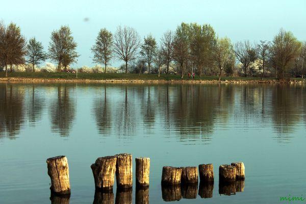 paletti nel lago
