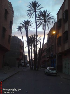 Palm in the middle of the street