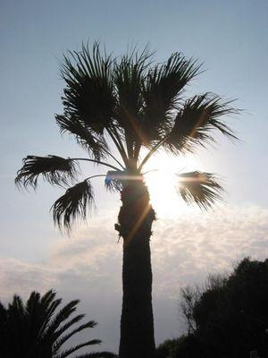 palm in the sun
