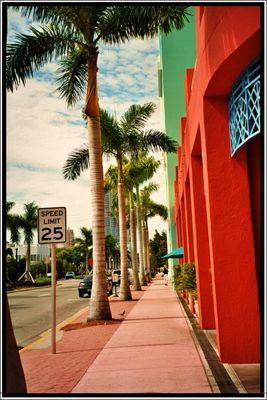 Palm Street 2