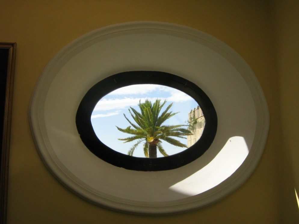 Palm Tree Through Round Window