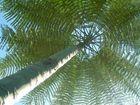 Palm tree to heaven