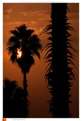 Palm trees in sunset