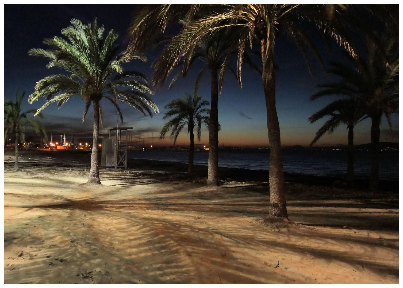 Palma im Winter 2010 V