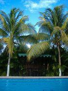 palmas
