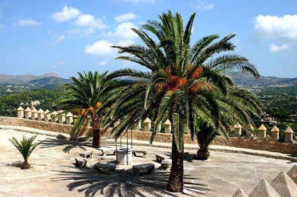 Palmas auf Mallorca