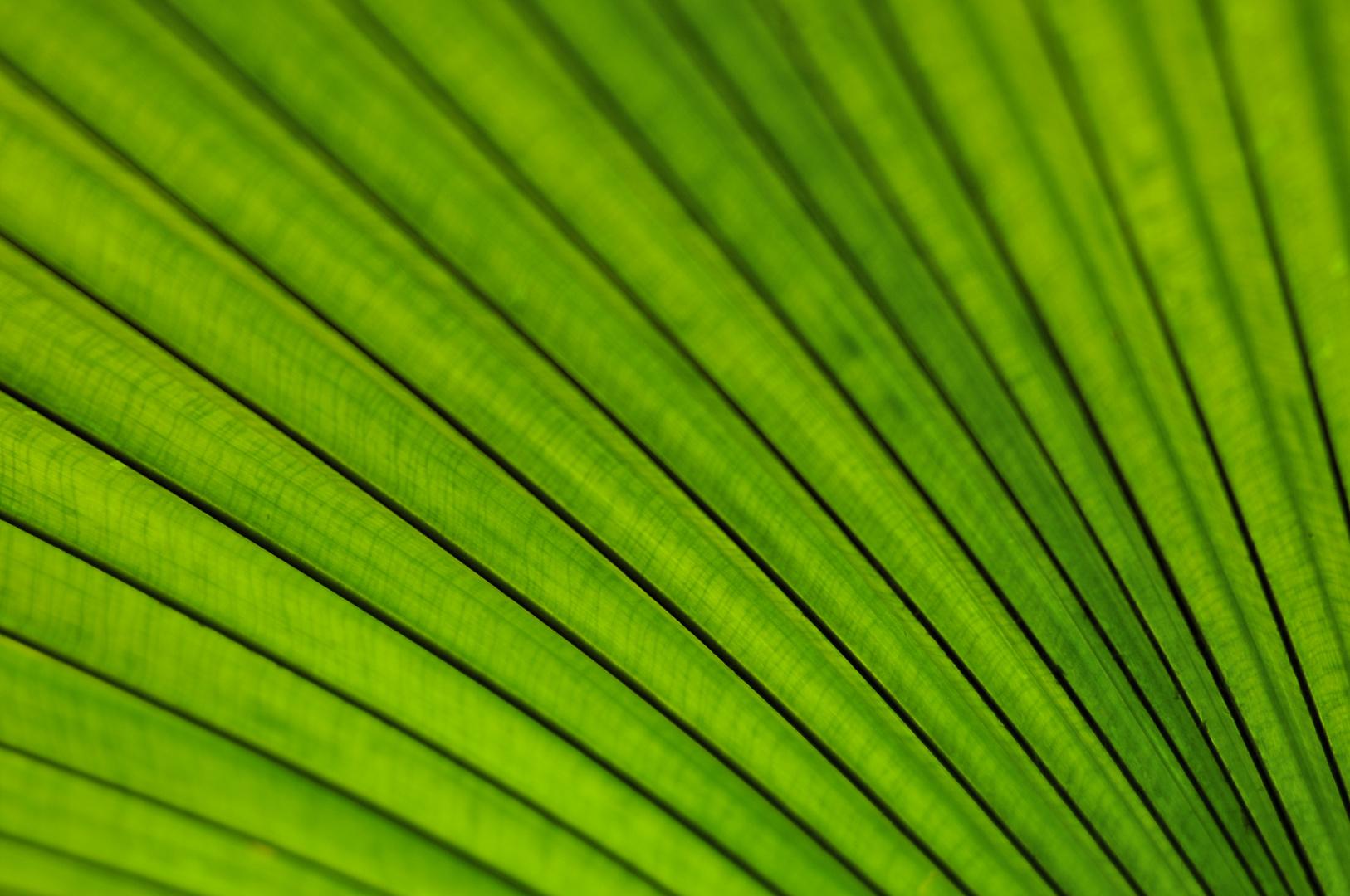 Palmblatt 2