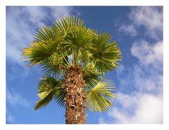Palme als Urlaubsgruß