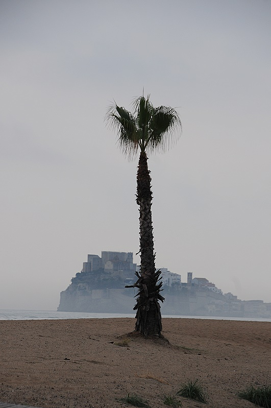 Palme am leeren Strand Peniscola