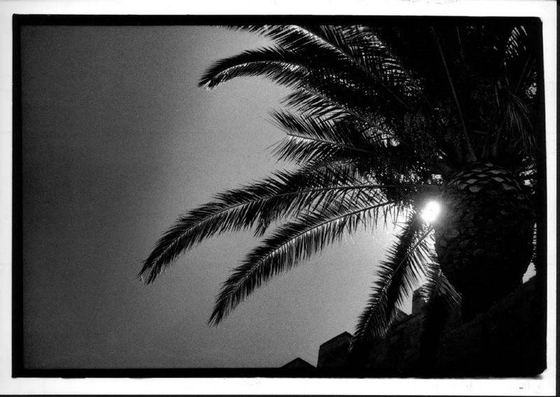 Palme am Nachmittag