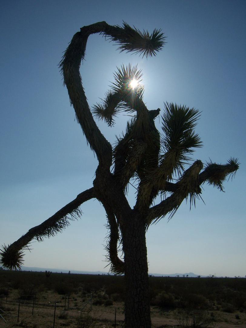 Palme am Rande der Straße