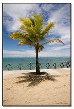 Palme an der Playa Dorada.....