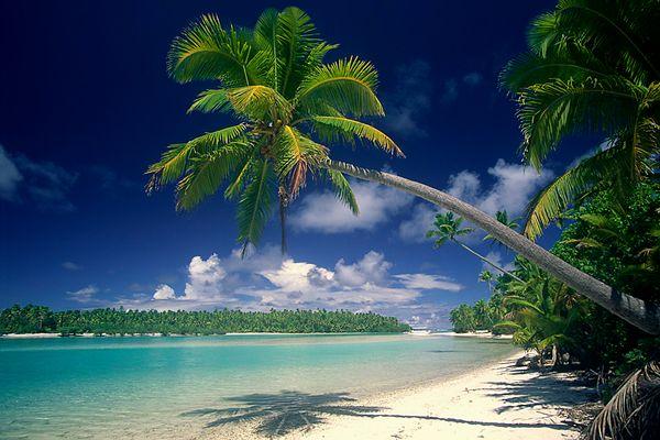 Palme auf Aitutaki III