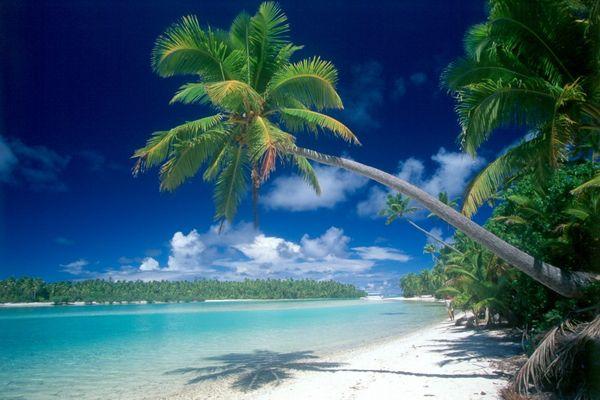 Palme auf Aitutaki (Zweiter Versuch)