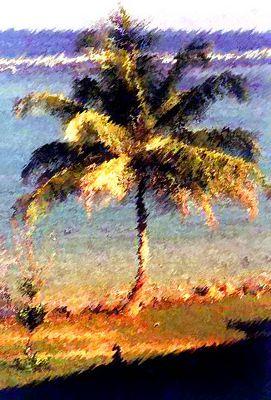 Palme auf Sri Lanka