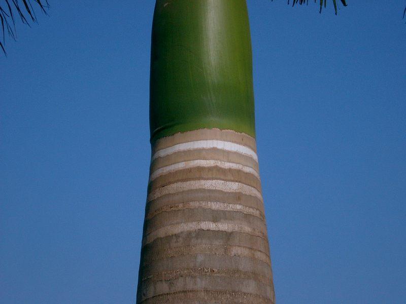 Palme Detail