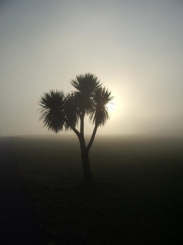 Palme im Nebel (Galway, Irland)