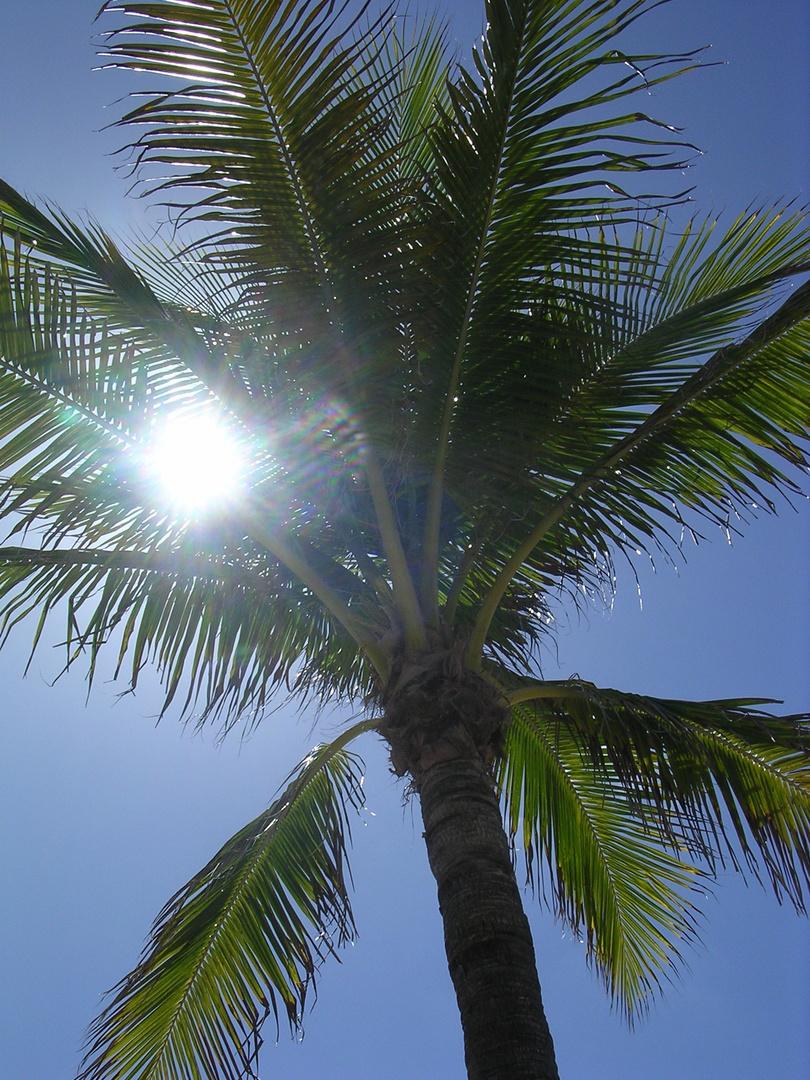 Palme in der Sonne