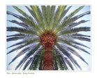 Palme in Elche... / Palmtree in Elx...