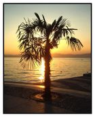 Palme in Flamme  Gardasee