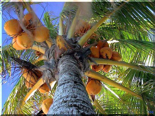 Palme in Mexico