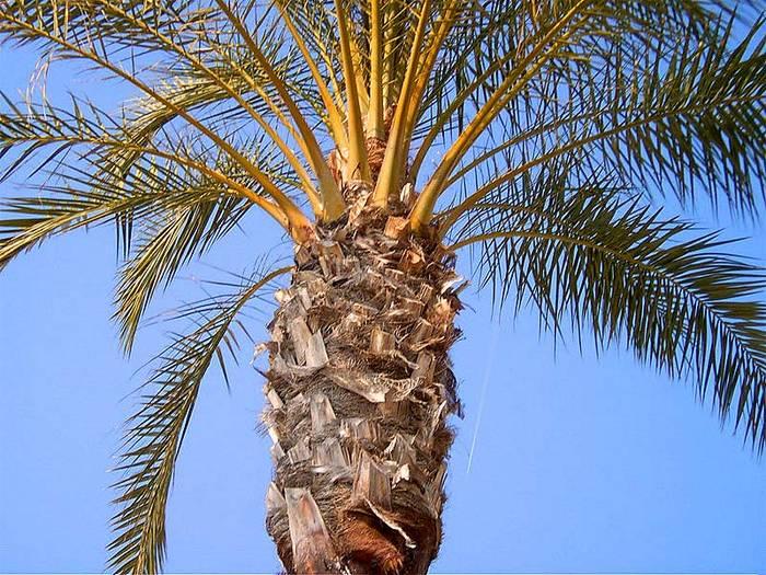 Palme in Nizza