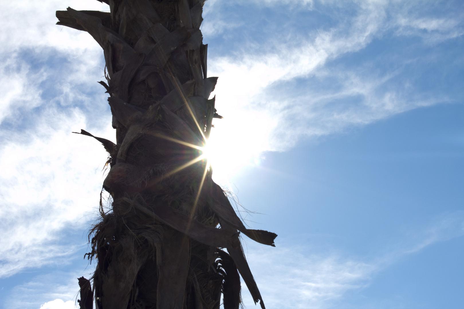 Palme in Viareggio ( Italien )