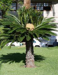 Palme mit Blüte