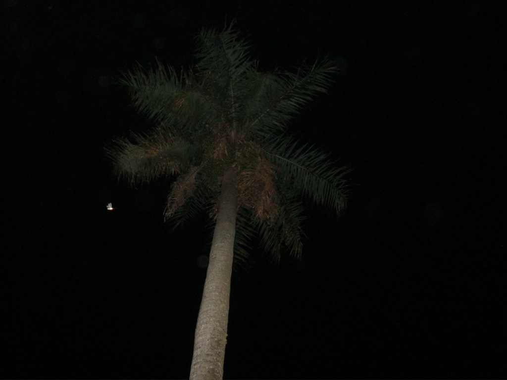 Palme mit Glühwürmchen