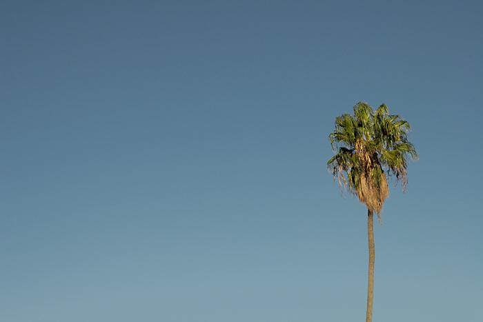 Palme ohne Insel