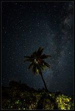 Palme unter Sternen