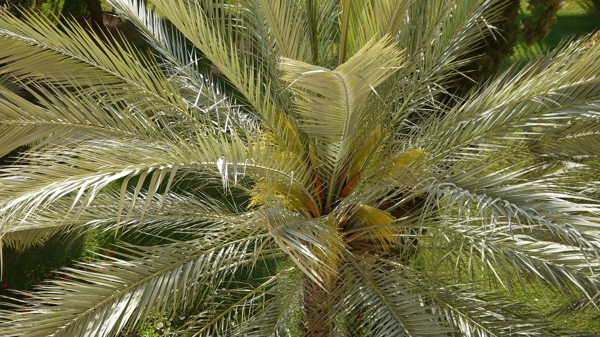 Palme von oben in der Morgensonne