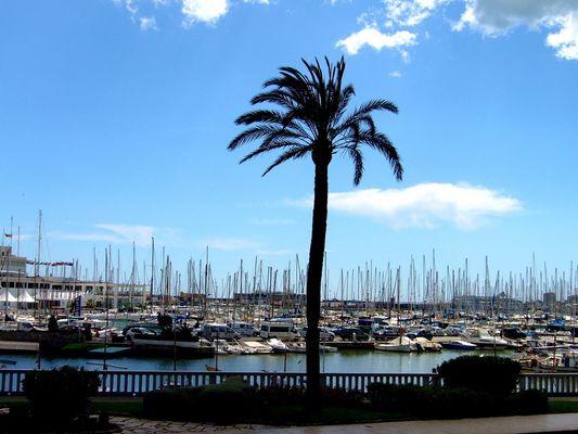 Palme vor Jachthafen----Palma