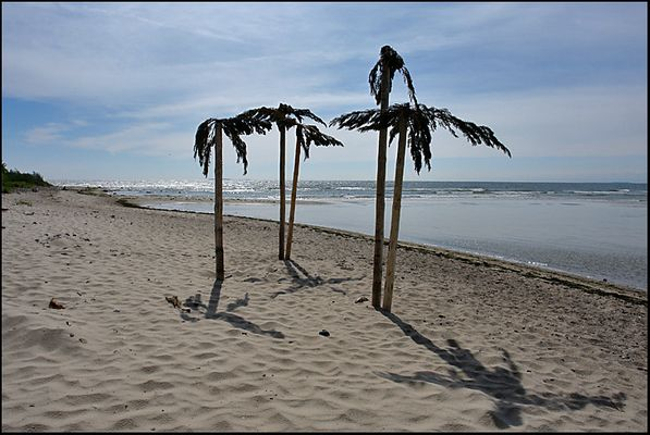 Palmen an der Ostsee ??