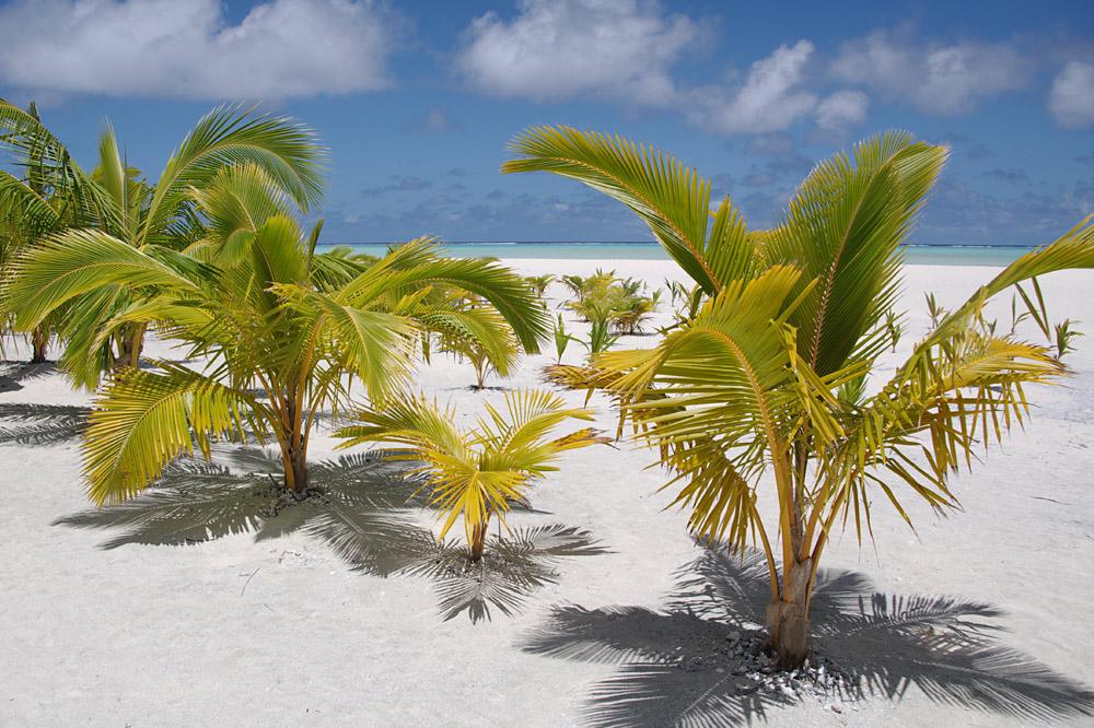 Palmen auf Honeymoon Island