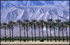 Palmen bei Mecca