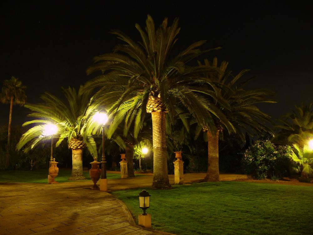 Palmen bei Nacht