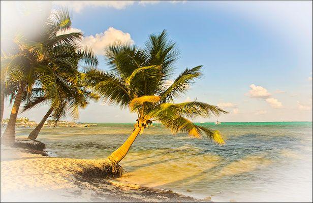 Palmen im Abendlicht.