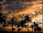 Palmen im Abendlicht